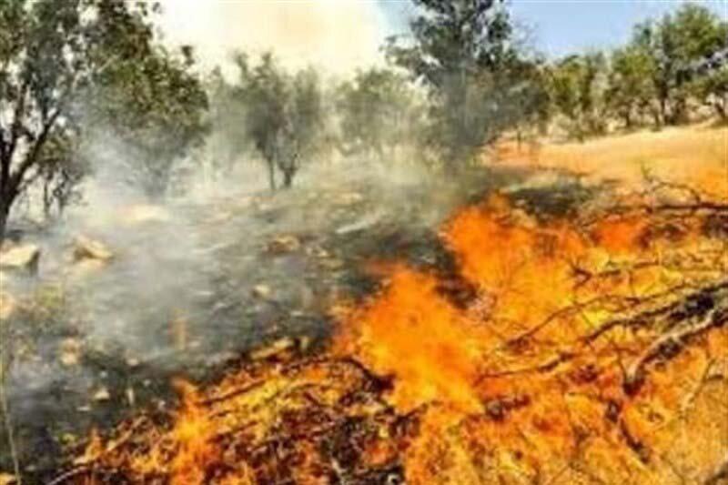 20 هکتار از مراتع طبیعی دهلران طعمه حریق شد