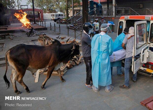 آمار افراد مبتلا به کرونا در هند به 9.7 میلیون نفر رسید
