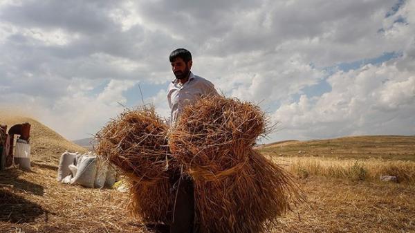 تعلل وزارت کشاورزی در تشکیل شورای قیمت گذاری محصولات اساسی